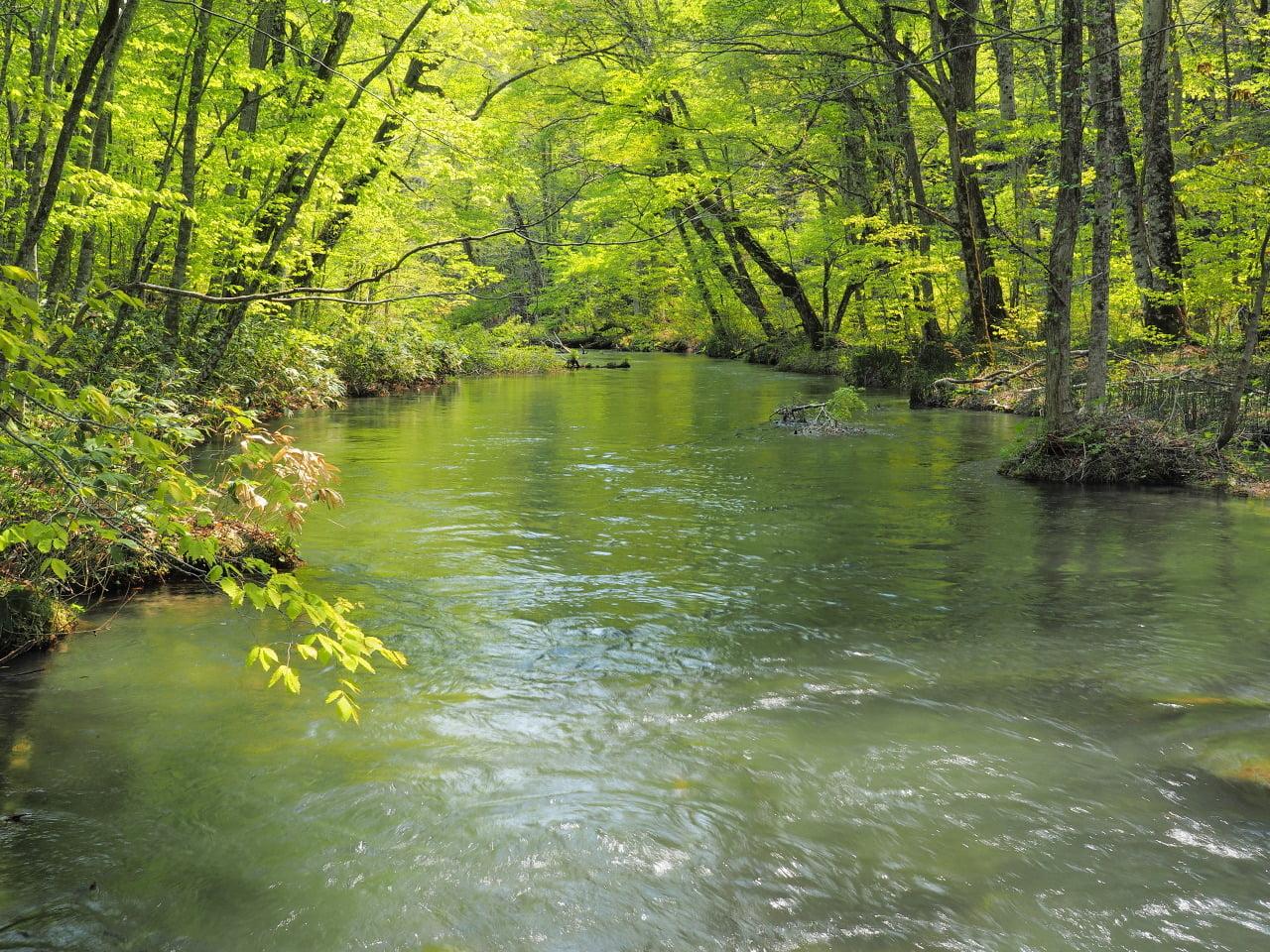 銀龍がいる奥入瀬渓流